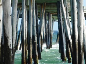 Through the Pilings