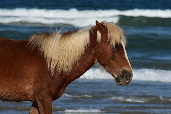 Wild Horse and Waves