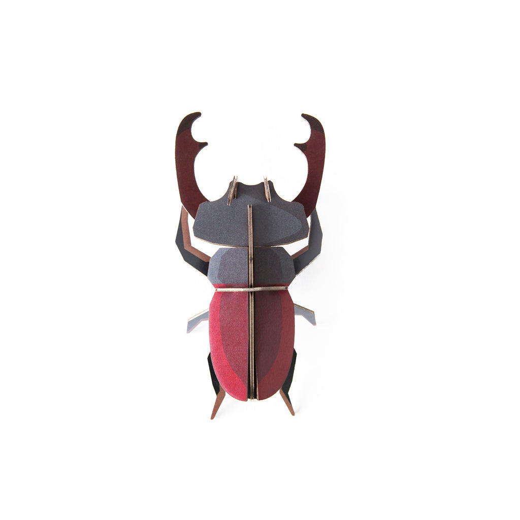 Little Wonders of Nature Stag Beetle
