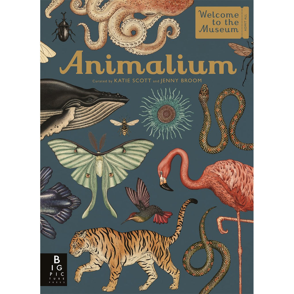 Welcome To The Museum - Animalium