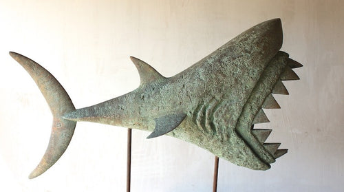 Art Gallery - Apex Shark - Bronze (FH)