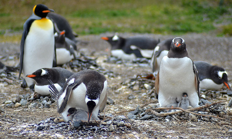 Global Penguin Society