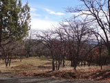 #L40004- 1.3 Acres in KCRE feet from the Klamath River, Siskiyou County, CA $14,999.00 ($216.31/Month)