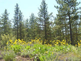 #L05055-1 1.25 Acres in California Pines, Modoc CA $5,899.00 ($109.40/Month)