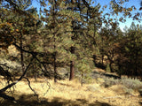 #L05821-1 Bear Valley, California Lot at the Top of the World $5,999.00 ($258.71/Month)