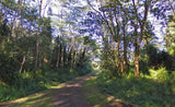 #L06586-1 Beautiful Wooded Lot in Nanawale Estates, Hawaii $15,899.00 ($232.81/Month)