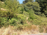 #L23093-1  Shelter Cove Lot, Less than Half a mile from the Pacific Ocean, Humboldt County CA $11,999.00 ($197.46/Month)