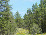 #L05072-1  .92 Acre Parcel in Modoc County, California $3899.00  ($74.14/Month)