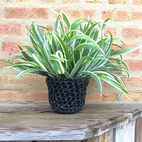 "6"" Crocheted Rubber Planter, Home goods, [collection], LINKS by Annette"