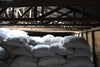 Costa Rican Coffee resting in sacks before peeling and shipment