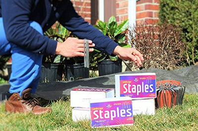 Ashman 6 Inch Landscape Staples, 500 pieces