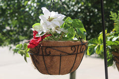 Ashman Metal Hanging Planter Basket with Coco Coir Liner Round Wire Plant Holder Chain Porch Decor Flower Pots Hanger Garden Decoration Indoor Outdoor Watering Hanging Baskets 200 Count