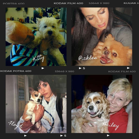 Photo collage of actors and crew with various dogs in the hair & makeup trailer on The L Word