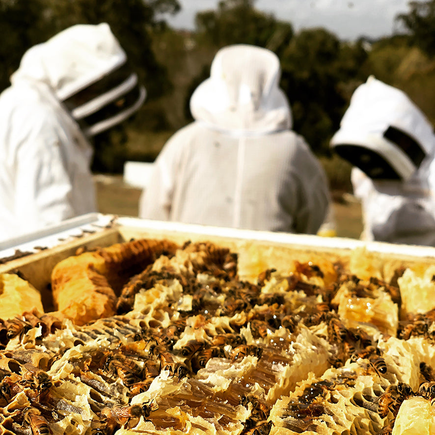 'Ask me about the Bees!' - A unique beekeeping experience