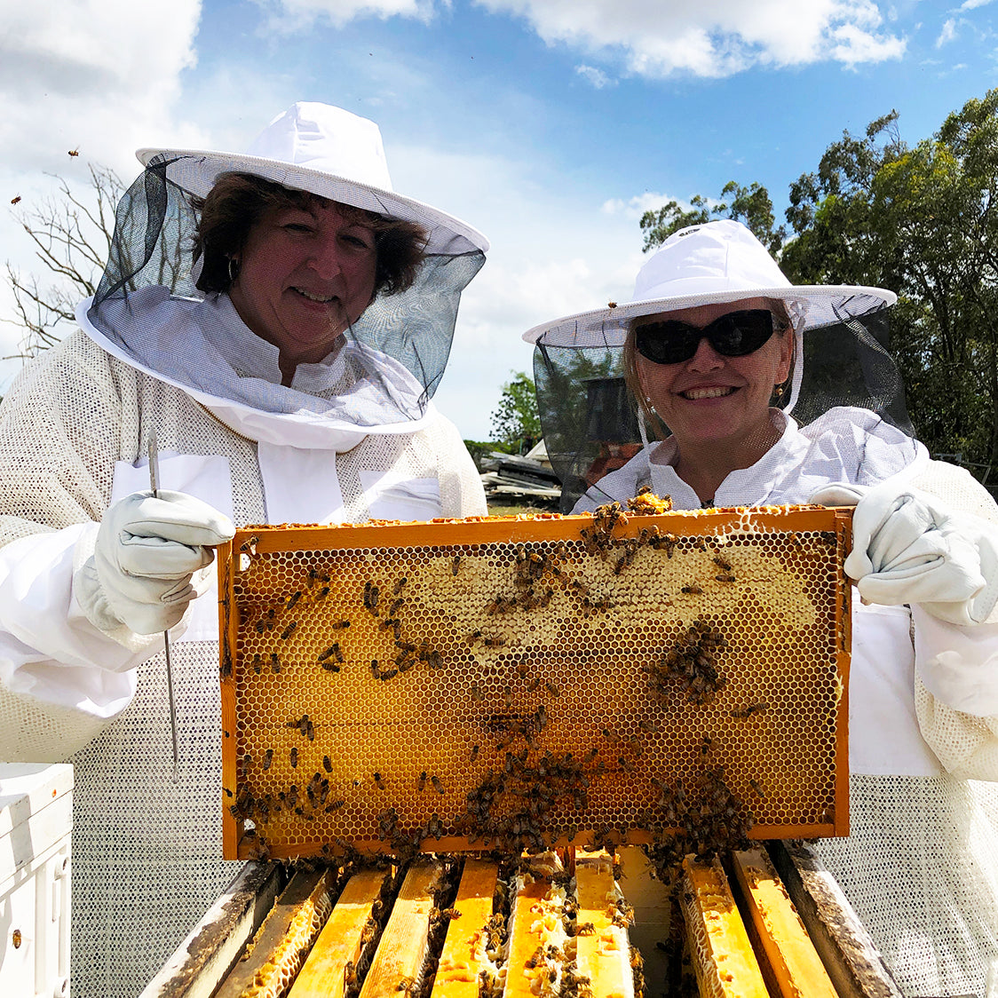 Small-Group Bee Farm Tour Experience | Geebung, Brisbane, QLD
