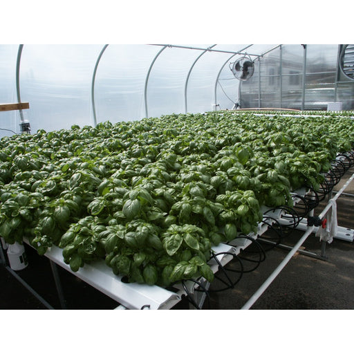 American Hydroponics Complete Commercial NFT Growing System - Basil-NWGSupply.com