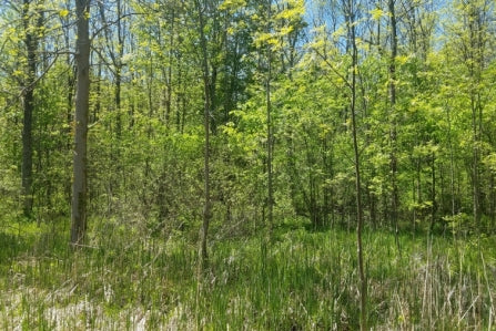 Oversized 322.6 Acres Culdesac Lot -Perfect for Farm or Ranch Home!
