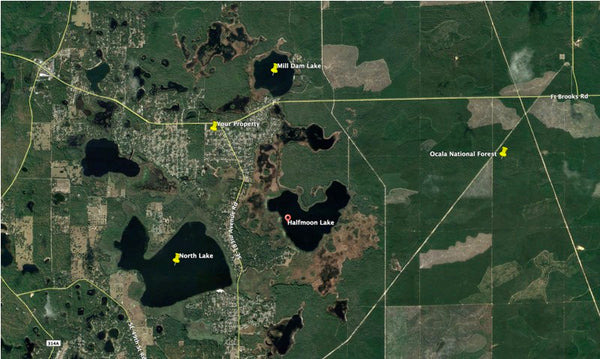 .26 acre lot near Ocala National Forest