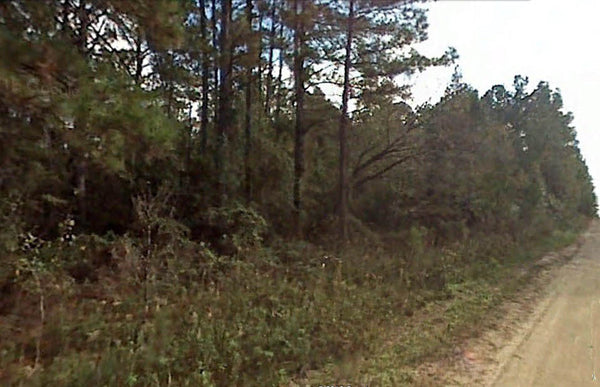 .25 acre lot Surrounded by Green- Minutes from Rainbow Springs -Owner Finance
