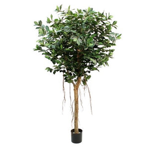 Ficus Compact Tree Faux