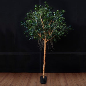 Ficus Compact Tree Faux (XL)