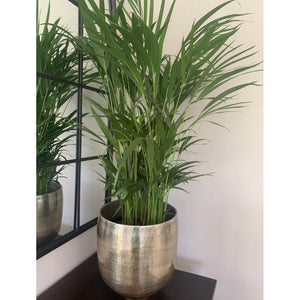 Planter Hammered Champagne Gold Planter (M)