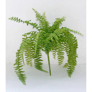 Greenery Sword Fern 19""