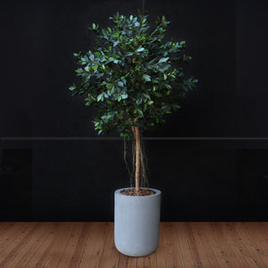 Ficus Tree in Grey Planter Faux