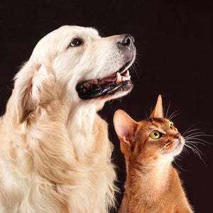 Pets - Animals Canvas Wall Art Sub Collection