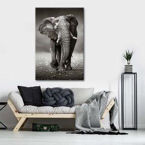 African Elephant BW Multi Panel Canvas Wall Art - Elephant
