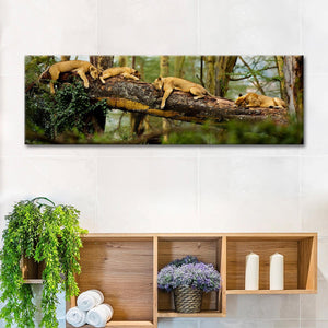 African Lion Cat Nap Multi Panel Canvas Wall Art - Lion