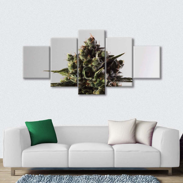 Blossoming Marijuana Multi Panel Canvas Wall Art