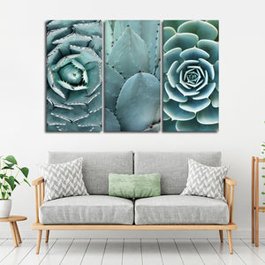 Cactus Assortment Canvas Set Wall Art - Botanical