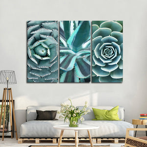 Cactus Compilation Canvas Set Wall Art - Botanical
