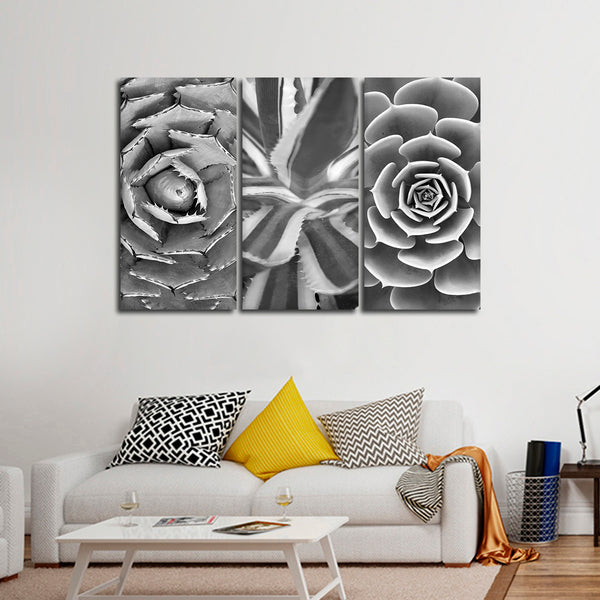 Cactus Assortment BW Canvas Set Wall Art