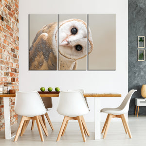 Curious Barn Owl Multi Panel Canvas Wall Art - Bird