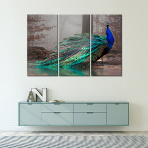 Elegant Peacock Multi Panel Canvas Wall Art - Bird