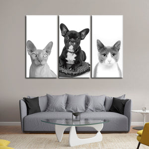 Furry Trio Canvas Set Wall Art - Cat