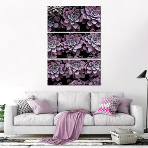 Monochrome Succulents Multi Panel Canvas Wall Art - Botanical