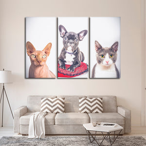 Pet Trio Multi Panel Canvas Wall Art - Cat