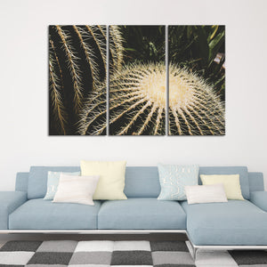 Cactus Close Up Multi Panel Canvas Wall Art - Botanical