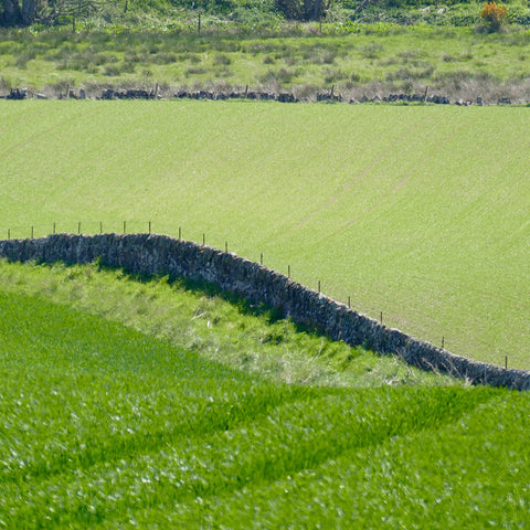 Green fields in Fife