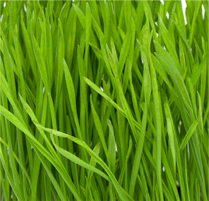 Organic Wheat Grass Juice