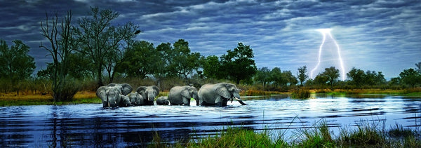 Herd of Elephants 2000 Piece Puzzle  - Galaxy Puzzles