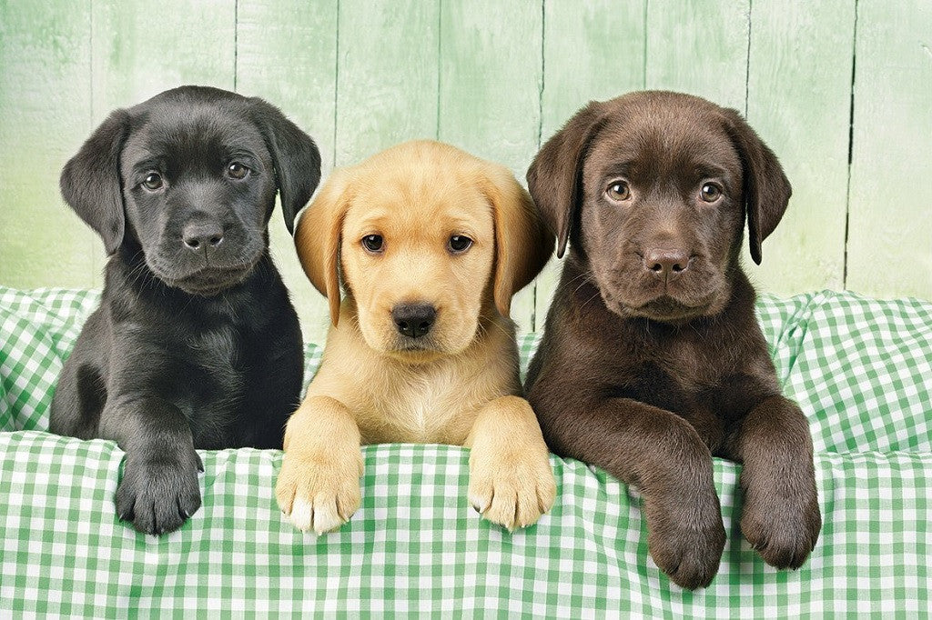 Labrador-retriever-puzzle
