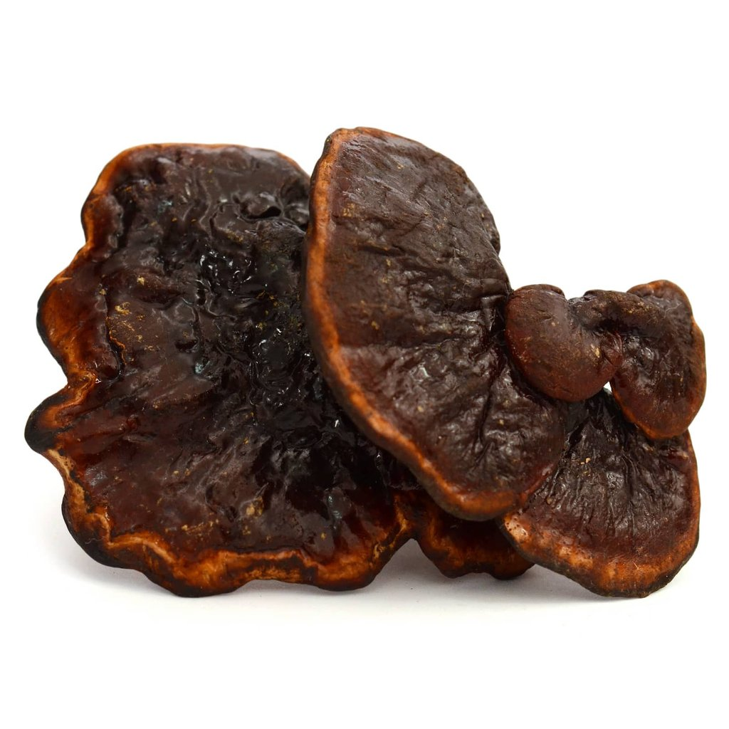 Reishi / Ganoderma / Lingzhi Mushroom Supports Your Immune System and Prostate Health