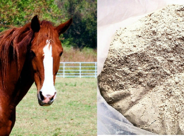 Boswellia Carteri Powder for Horse Joints