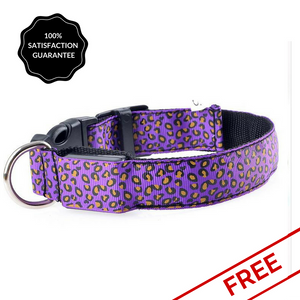 Natty Pooch purple Led collar