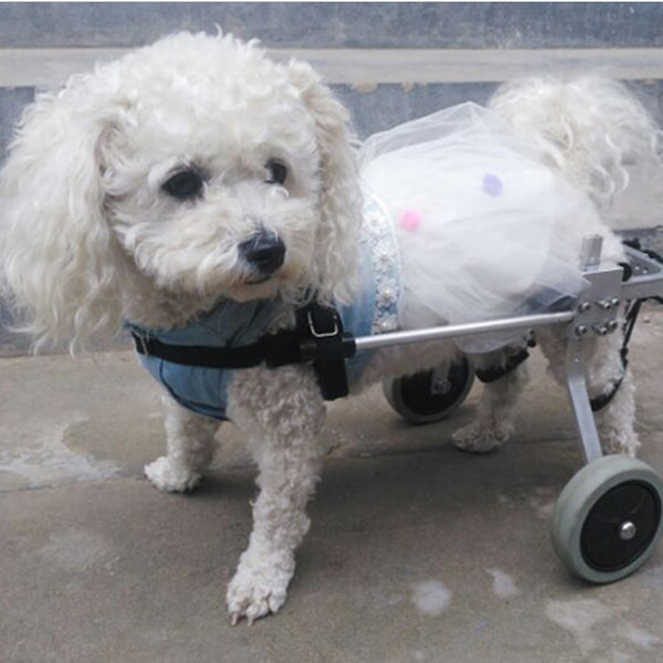 Personalised Dog Disability Recovery Auxiliary Scooter Wheelchair