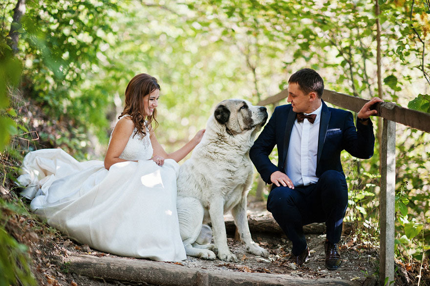 a bride and groom sitting with their dog on a path